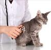 Ветеринарные клиники в Байкале